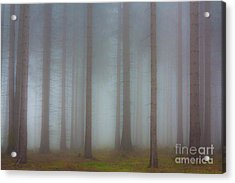 Forest In The Fog Acrylic Print by Michal Boubin