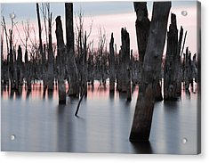 Forest In The Water Acrylic Print