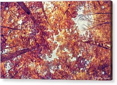 Forest-into The Skies-01 Acrylic Print