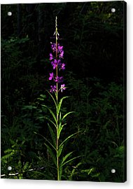 Acrylic Print featuring the photograph Forest Jewels by Fred Denner