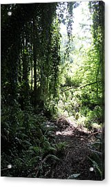Forest Jungle Acrylic Print