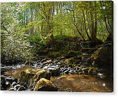Forest Landscape Acrylic Print by Svetlana Sewell