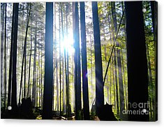 Forest Light Rays Acrylic Print