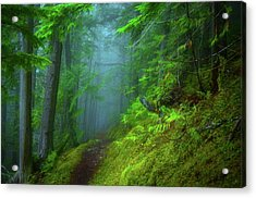 Forest Mysteries 2 Acrylic Print