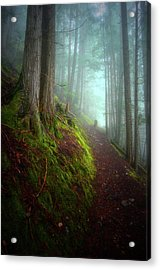 Forest Mysteries 3 Acrylic Print