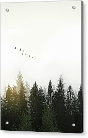Forest Acrylic Print by Nicklas Gustafsson