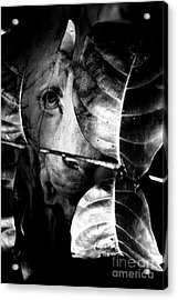 Forest Of The Labyrinth Lion Acrylic Print by Jorgo Photography - Wall Art Gallery