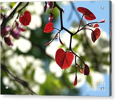Forest Pansy Redbud Leaves In Spring Acrylic Print by Anna Lisa Yoder