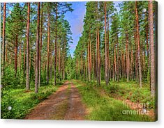 Forest Path 2 Acrylic Print