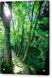 Acrylic Print featuring the photograph Forest Path by Bee-Bee Deigner