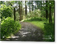 Forest Path. Acrylic Print