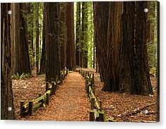 Forest Path Acrylic Print by Eric Foltz