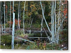 Acrylic Print featuring the photograph Forest Pond by Joseph G Holland