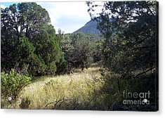 Forest Primevil Acrylic Print
