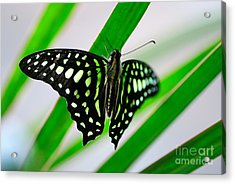 Forest Queen Acrylic Print by Charles Dobbs