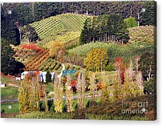 Acrylic Print featuring the photograph Forest Range, Adelaide Hills by Bill  Robinson