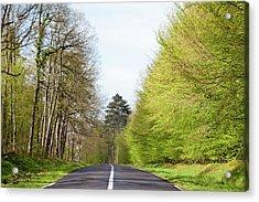 Forest Road Acrylic Print by Yoel Koskas
