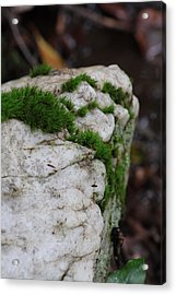 Forest Rock With Moss Acrylic Print by Pamela Smith