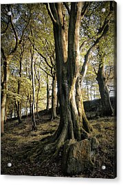 Forest Shadow Acrylic Print