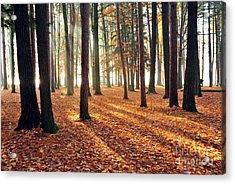 Forest Shadows Acrylic Print by Terri Gostola