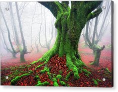 Forest Speeches Acrylic Print