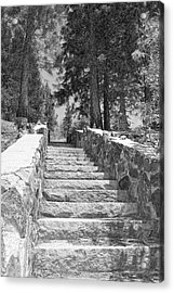 Forest Stairway Acrylic Print