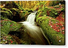 Acrylic Print featuring the photograph Forest Stream by Jorge Maia