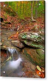 Forest Stream Acrylic Print by Ryan Heffron