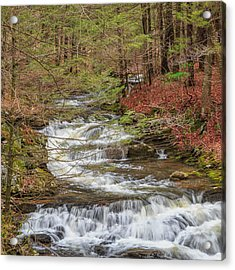 Forest Stream Square Acrylic Print by Bill Wakeley
