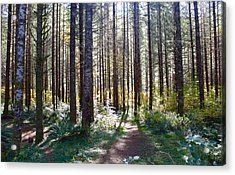 Forest Stroll Acrylic Print
