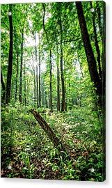 Acrylic Print featuring the photograph Forest Sun by Alan Raasch