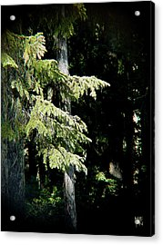 Forest Sunlight - 1 Acrylic Print by Shirley Heyn