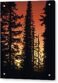 Forest Sunset Acrylic Print by Leland D Howard
