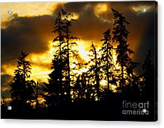 Acrylic Print featuring the photograph Forest Sunset  by Nick Gustafson