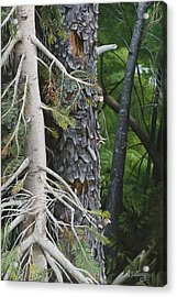 Forest Textures Acrylic Print by Wendy Ballentyne