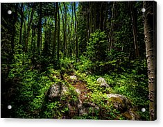 Forest Tranquility Acrylic Print