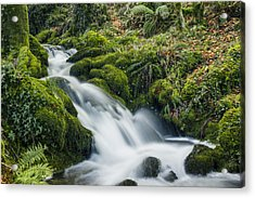Forest Treasures  Acrylic Print by Ian Mitchell
