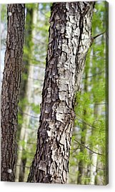 Acrylic Print featuring the photograph Forest Trees by Christina Rollo