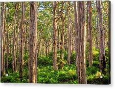Acrylic Print featuring the photograph Forest Twilight, Boranup Forest by Dave Catley
