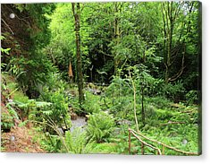 Acrylic Print featuring the photograph Forest Walk by Aidan Moran