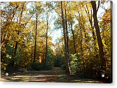 Acrylic Print featuring the photograph Forest Walk by Joseph G Holland