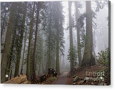 Acrylic Print featuring the photograph Forest Walking Path by Peggy Hughes