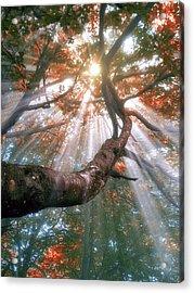 Forest With Fog And Sun Rays Acrylic Print