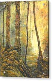 Forest Wonderment Acrylic Print by Craig shanti Mackinnon