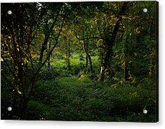 Forestland In Sudbury Ma Wayside Inn Acrylic Print
