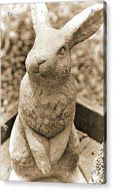 Forever Buck Bunny Acrylic Print by JAMART Photography