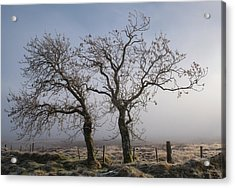 Acrylic Print featuring the photograph Forever Buddies Facing The Fog by Jeremy Lavender Photography