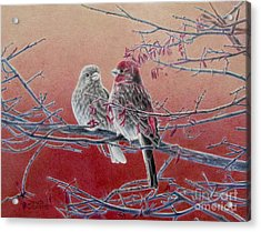 Forever Finch Acrylic Print by Pamela Clements