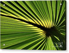 Forever Fronds Acrylic Print
