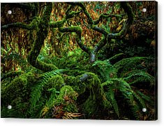 Forever Green Acrylic Print by Edgars Erglis